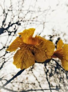 花 花心 背景 自然 春天 季