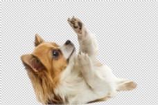 宠物狗素材