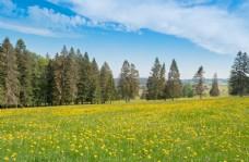 春天的草原