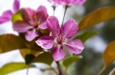 春天红色花多高清摄影图