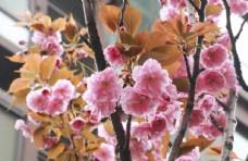 春天盛开的花
