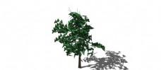 树skp模型