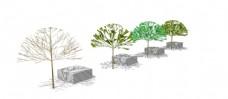 景观树skp模型