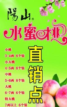 阳山水蜜桃  海报