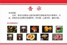 毒蘑菇告示
