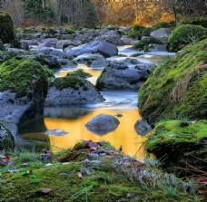林间溪水山水风景