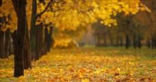 秋天落葉的視頻素材