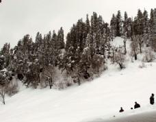 树林 雪景