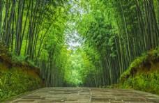 竹林石板路